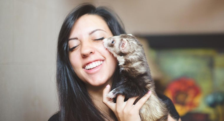 name-baby-ferret