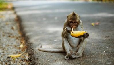 What Kind of Food Do Monkeys Eat?