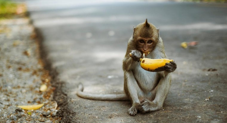 kind-food-monkeys-eat