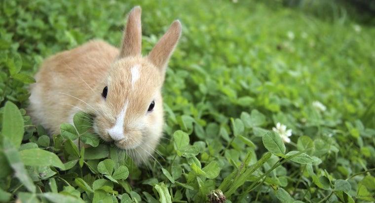 kind-food-rabbits-eat