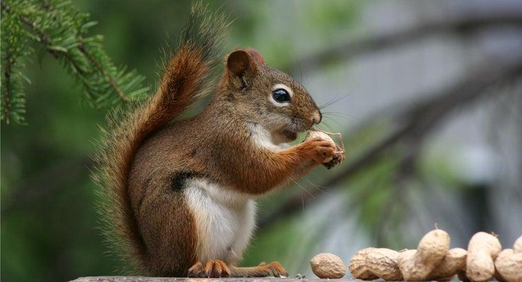 kind-nuts-squirrels-eat