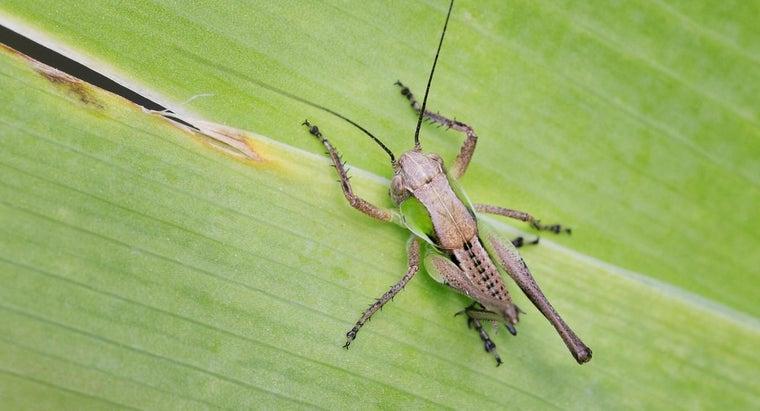 kind-plants-grasshoppers-eat