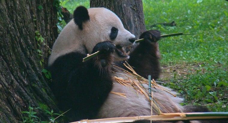 pandas-eat