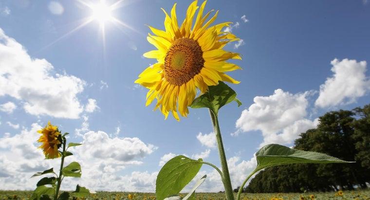 percent-sun-s-energy-plants-use