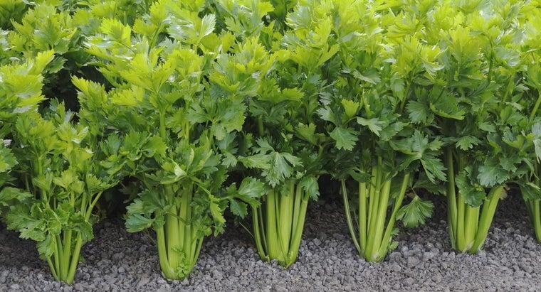 states-celery-grow