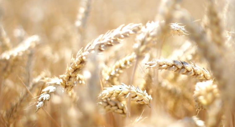 wheat-intolerance