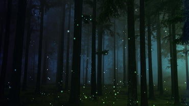 When Do Fireflies Come Out?