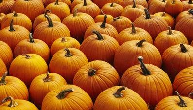 When Should You Plant Pumpkins in Missouri?