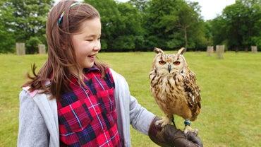 Where Can I Buy an Owl?