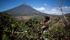 Where Did Coffee Originate?