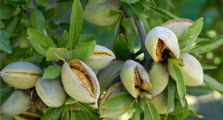 almonds-grow