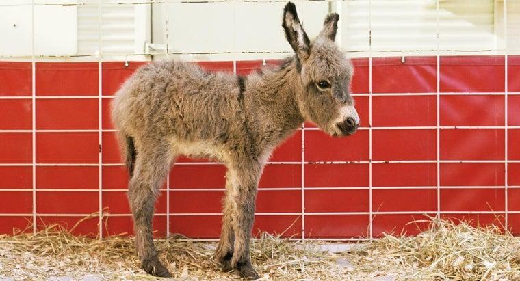 donkeys-live