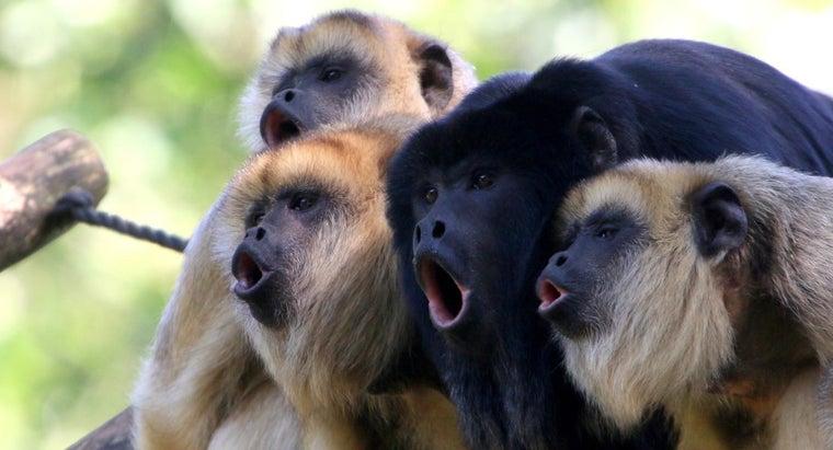 wild-howler-monkeys-live