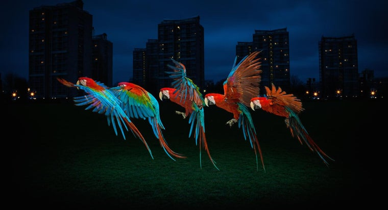 macaws-live