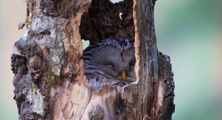 owls-sleep