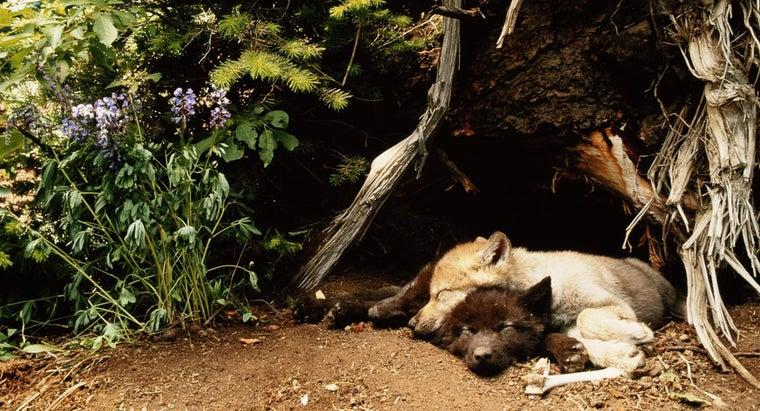 wolves-sleep