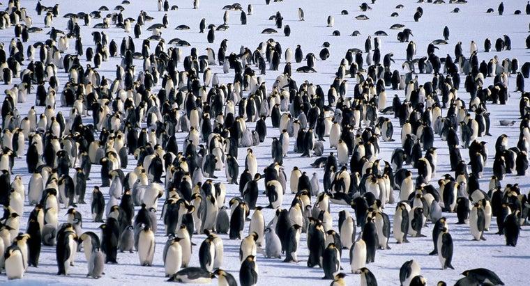 penguins-live