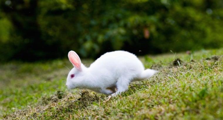 garden-plants-poisonous-rabbits