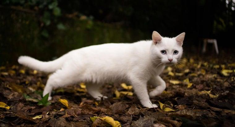 white-cat-symbolize