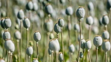 Who Won the Opium War Between China and Great Britain?
