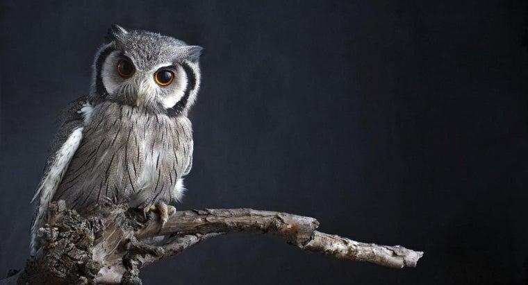 owls-seen-wise