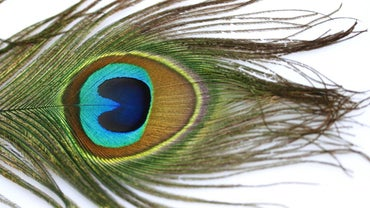Why Are Peacock Feathers Bad Luck?