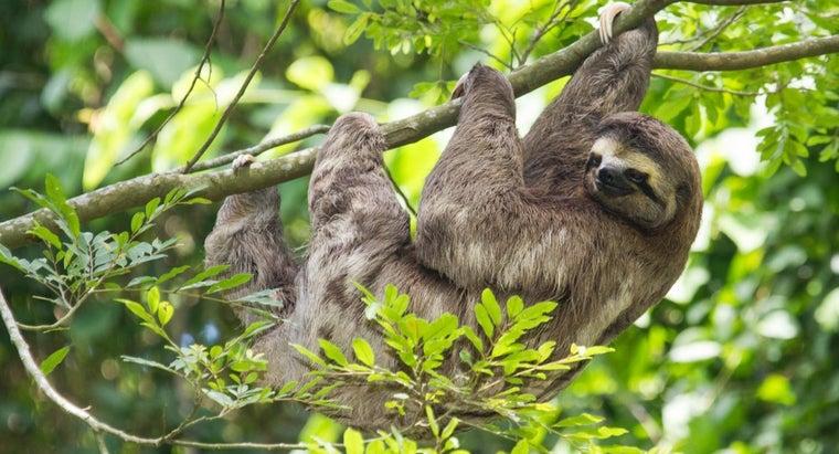 sloths-endangered