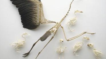 Why Do Birds Have Hollow Bones?