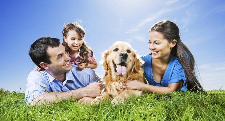 dogs-lay-sun