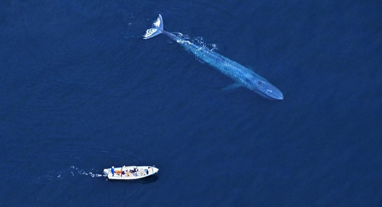 people-kill-blue-whales