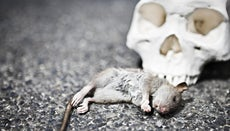 Why Does Rigor Mortis Occur?