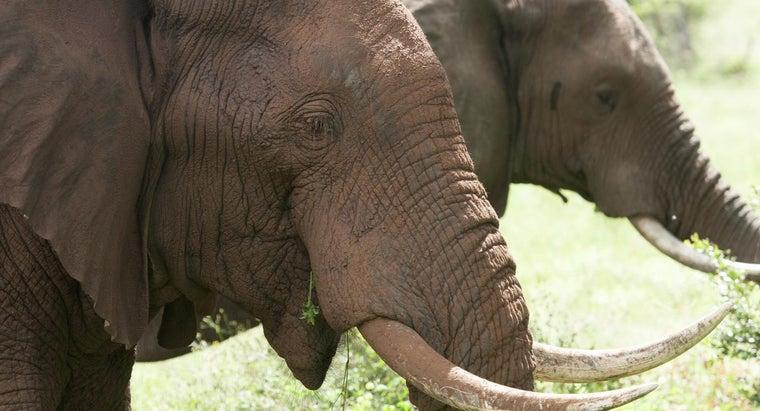 ivory-valuable