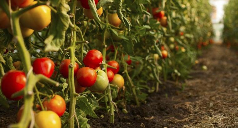 soil-important-plants