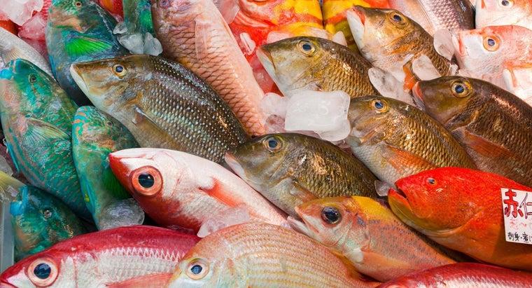 widely-eaten-fish-world