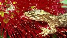 How Do You Feed Wild Geckos?