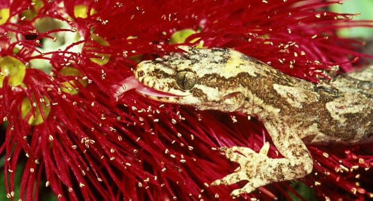 feed-wild-geckos