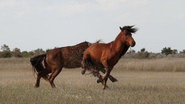 Where Do Wild Horses Live?
