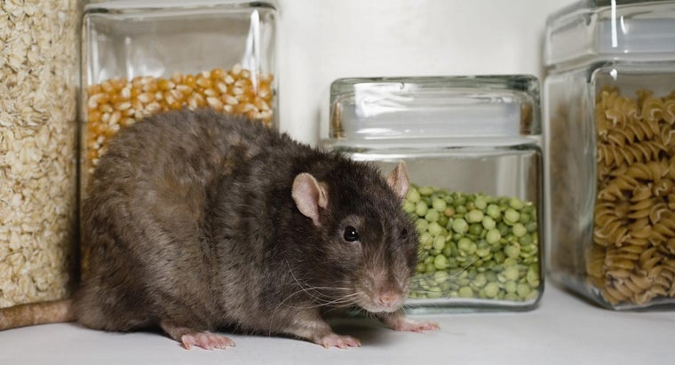 Will Vinegar Keep Rats Away?   Reference com