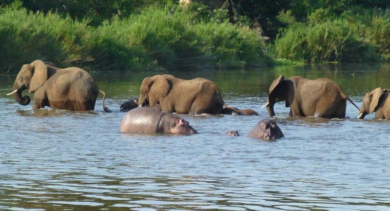 wins-hippo-versus-elephant-fight