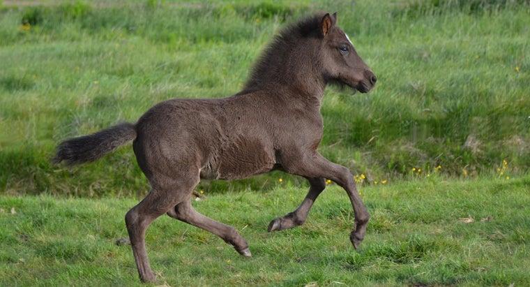 would-colt-run-away