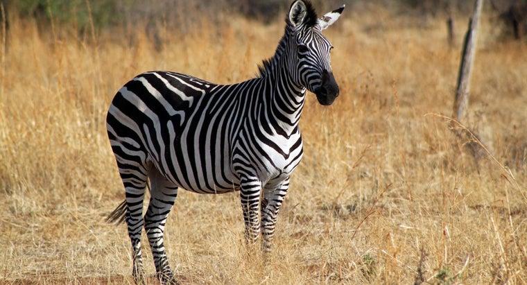 zebra-s-habitat