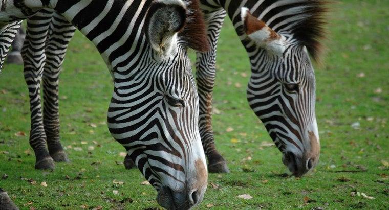 zebras-classified