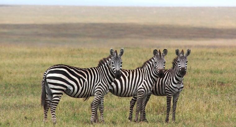 zebras-migrate