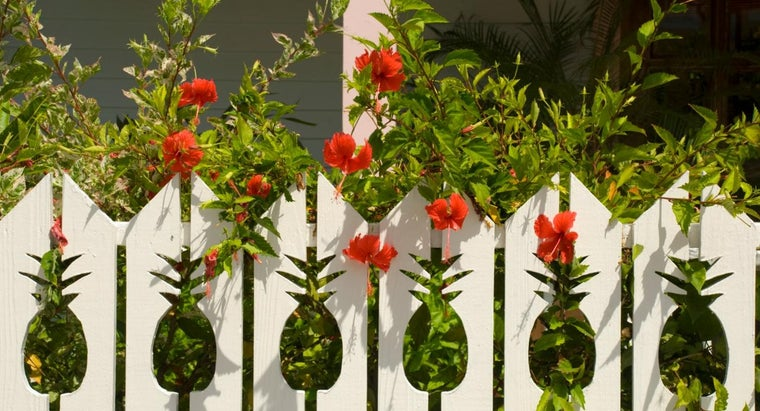 How and When Do You Prune Hibiscus Plants?