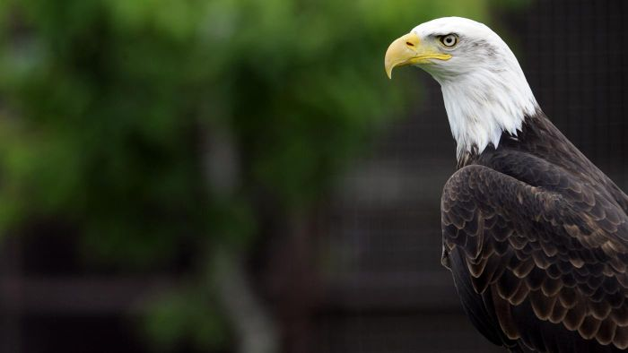 How Can You Watch the Minnesota DNR EagleCam?