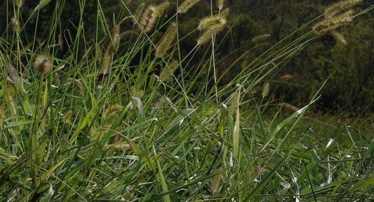When Should You Plant Rye Grass?