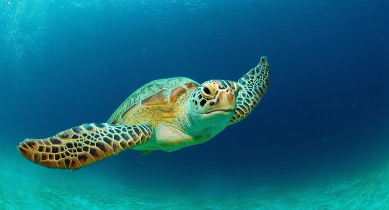 How Long Do Turtles Live?