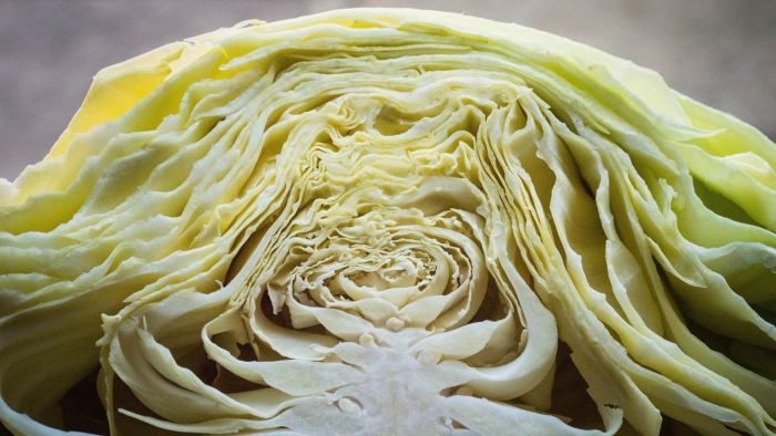 What Are Some Popular Boiled Cabbage Recipes?