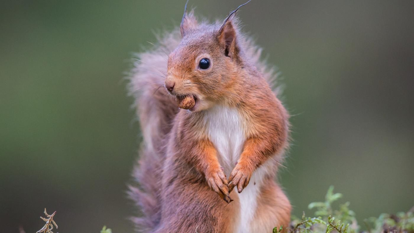 How Can You Get Rid Of Squirrels In Your Yard