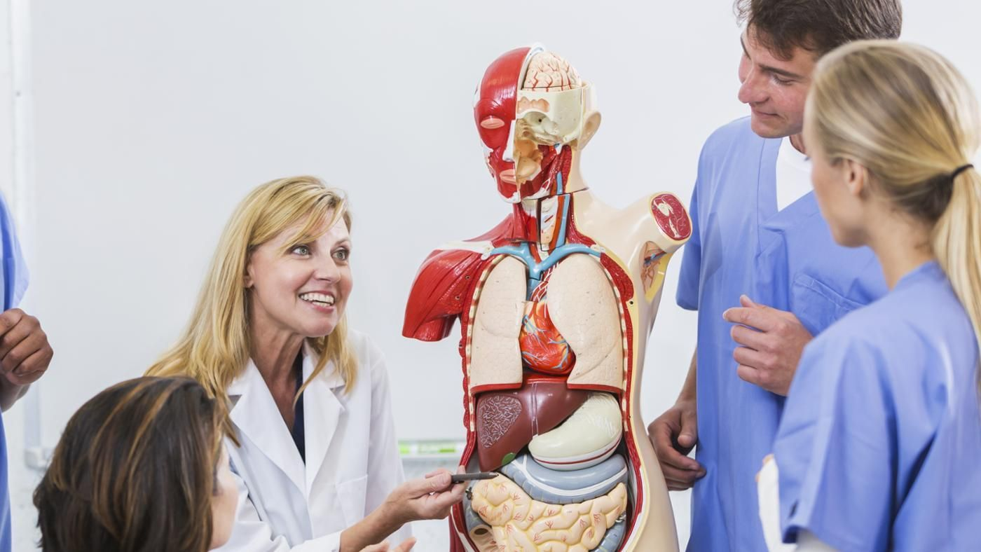 Where Are The Respiratory Organs Located In The Human Body